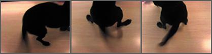 stephanielempert4.jpg